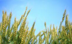 小麦粉はそんなに悪いのか?